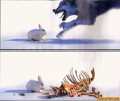 rabbitdeath.jpg